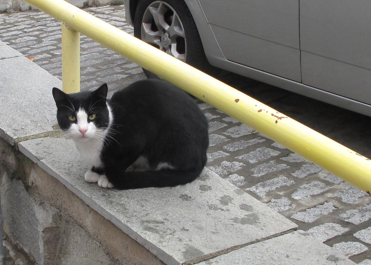 thessaloniki cat